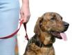 Hundeschulen, Tierschutzvereine & Co