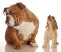 Plaudereien um Hunde